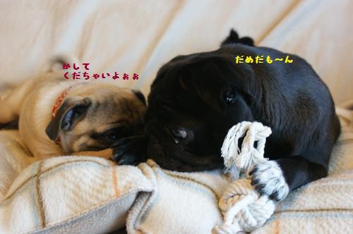 6_20110717153137.jpg