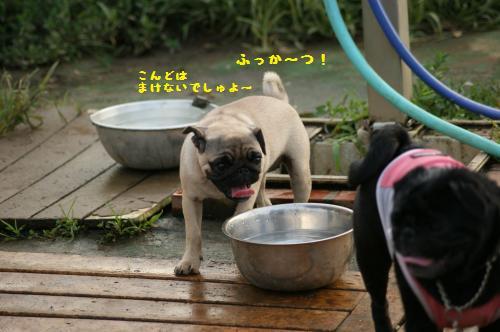 8_20110818183930.jpg