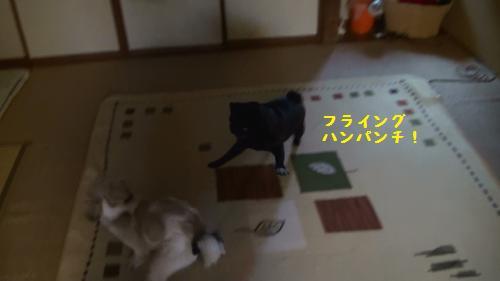 9_20110507165841.jpg