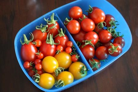 トマトギフト0710