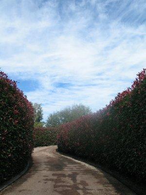 2010_04_25 003