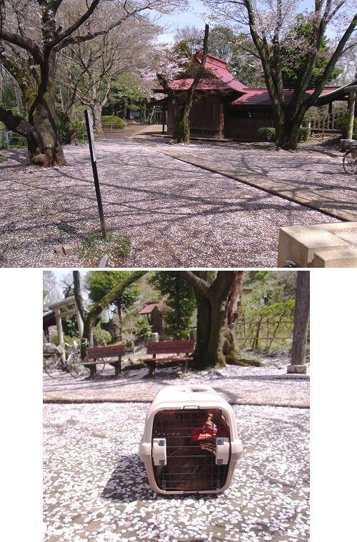 5荒幡神社