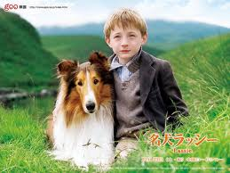 犬のラッシー.jpg