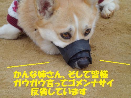 012_convert_20130120235016.jpg