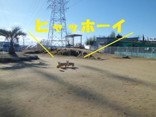 016_convert_20121231185914.jpg