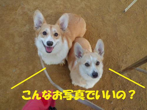 026_convert_20130208152716.jpg