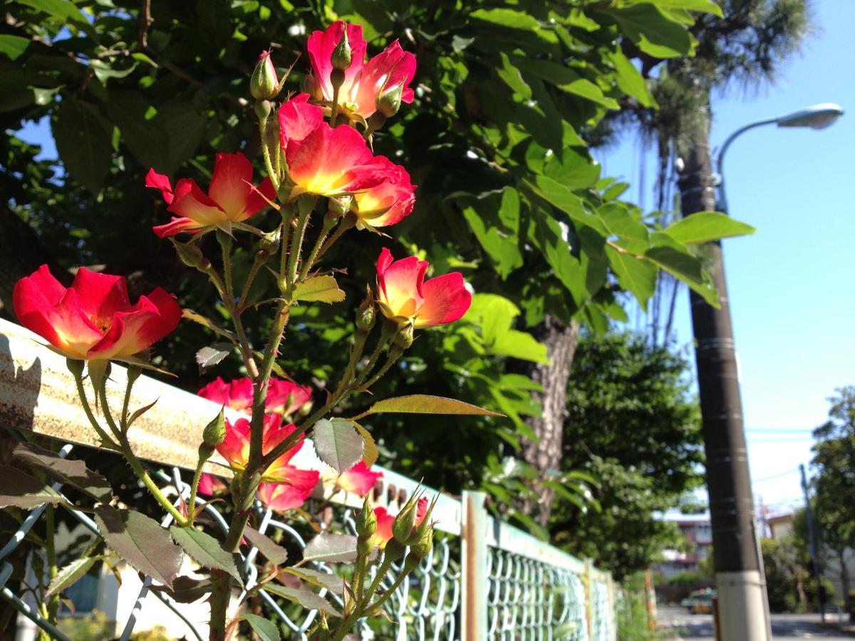 フェンスと花