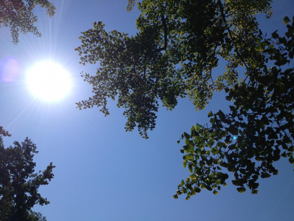 太陽のような存在