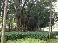 taiwan 大安森林公園1