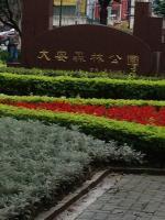 大安森林公園4