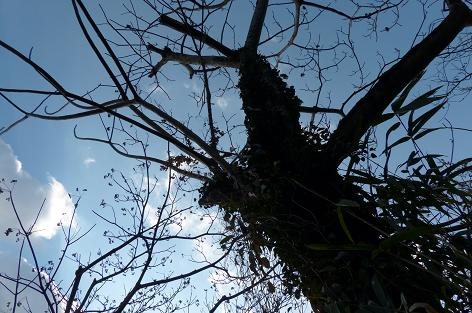目印の木♪