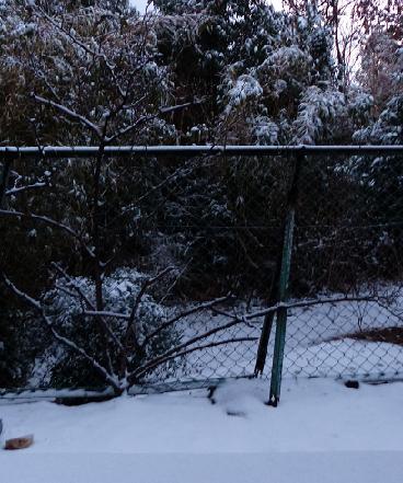 庭は真っ白でした♪