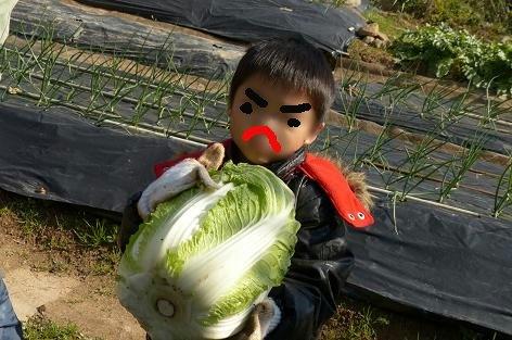 重たい白菜もバッチリ♪