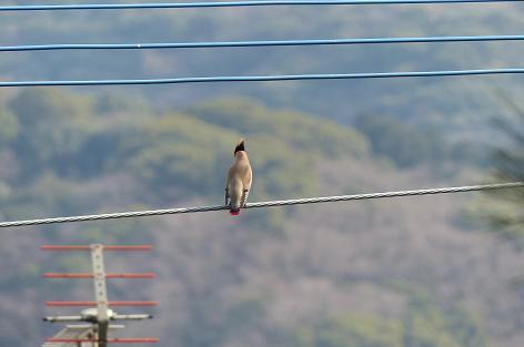 電線に鳥が♪