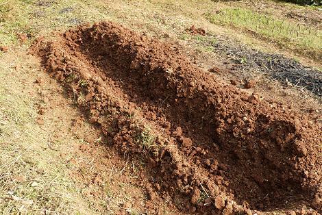 よく耕して掘って♪