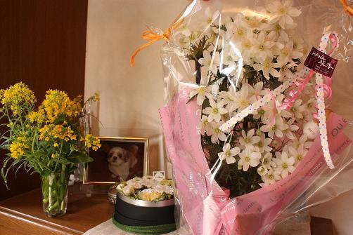 玄関の花♪