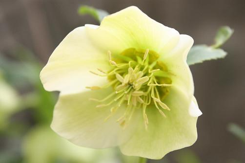 白いお花のお顔♪