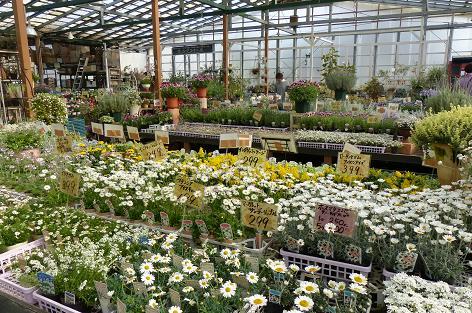 白い花もいっぱい♪