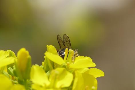 花粉がいっぱい♪