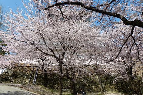 桜で見えない♪