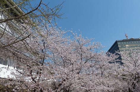 小倉城と市役所♪