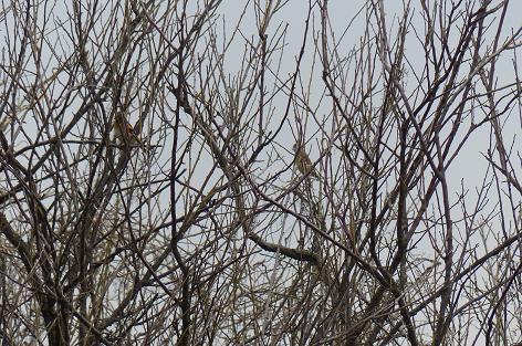 野鳥の木♪