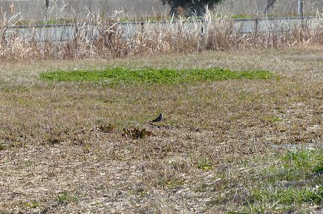草原に小鳥♪
