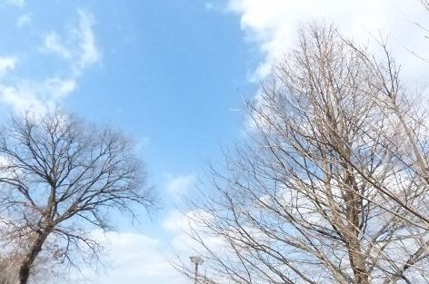 冬の青空♪