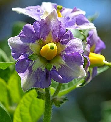 メイクィーンの花♪