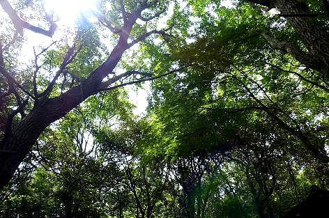 静かな森の中♪