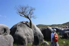 根性の木♪