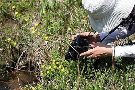 湿原の花♪