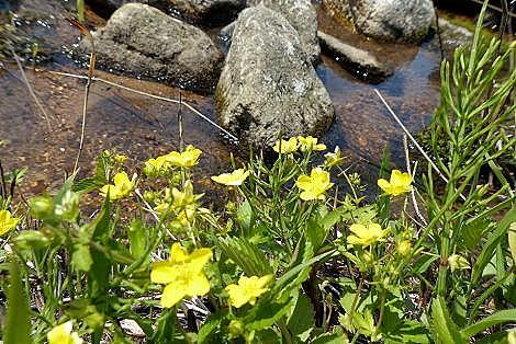 湿原の可愛い花♪