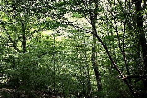 深い森を進み♪