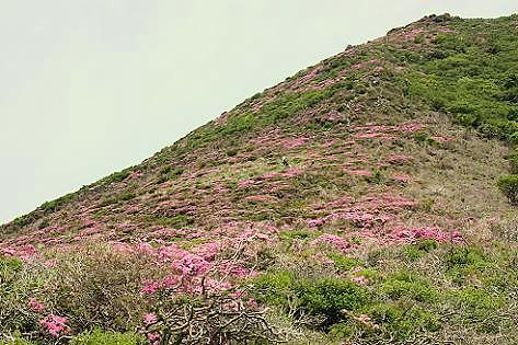 ピンク色の山だ~♪