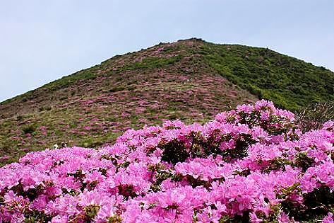 ミヤマキリシマの平治岳へ♪