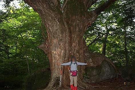 大きな木と根っこ♪