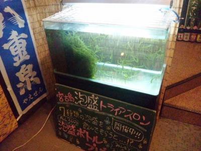 130525しーさ東三国店前海ぶどう水槽