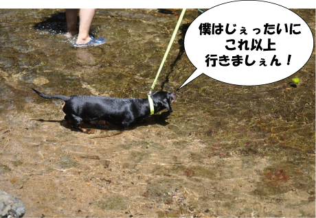12_20110719234100.jpg