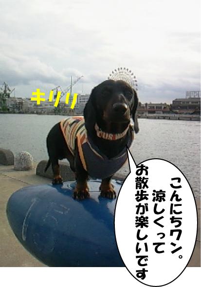 1_20111007020235.jpg