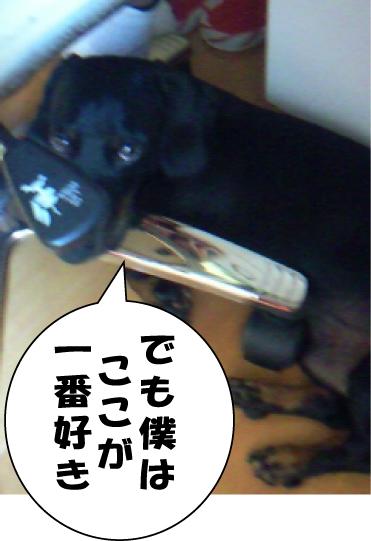 画像-0017