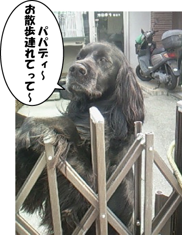 2_20110713015225.jpg