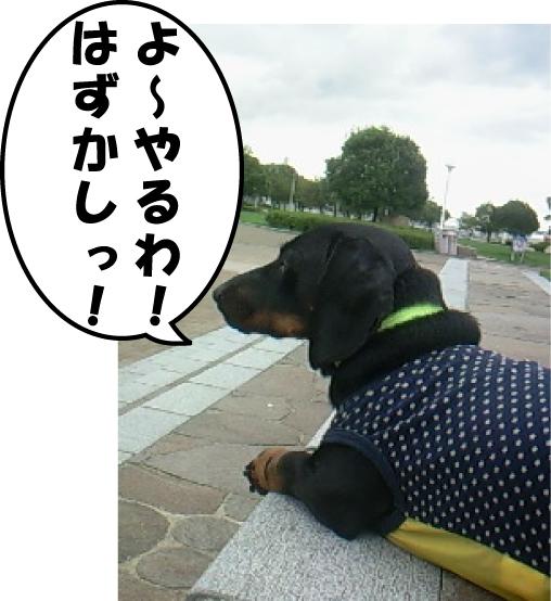 2_20111003225844.jpg