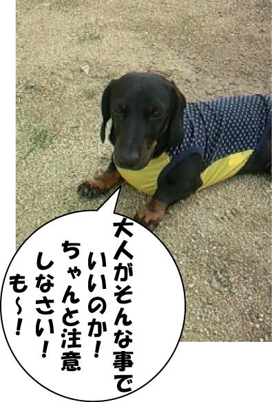 3_20111003231711.jpg