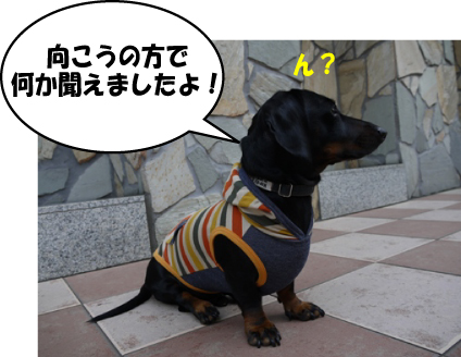 3_20111005224355.jpg