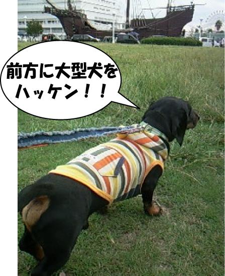 3_20111007020234.jpg