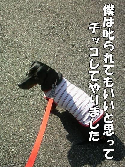 3_20111108210827.jpg