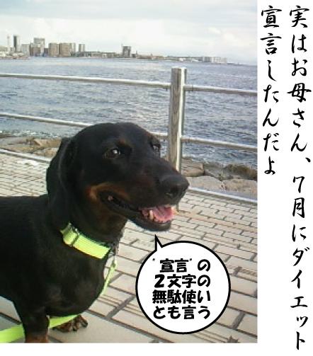4_20110901222338.jpg