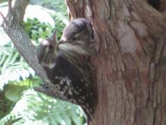 二匹目のヒナ鳥発見