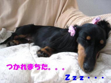 疲れたデス。。。ねむねむ